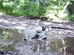 Mud bath in the wallow